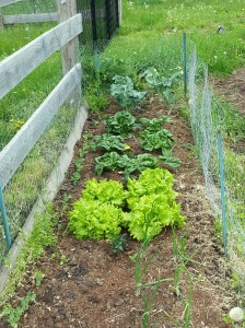 First Garden 2013