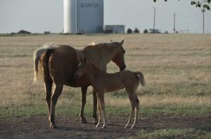 Kansas Mom and baby