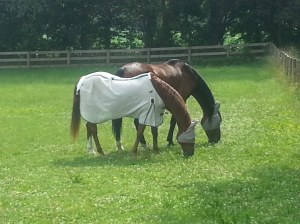 Quincy and Danny Grazing