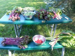Garden Harvest What Works